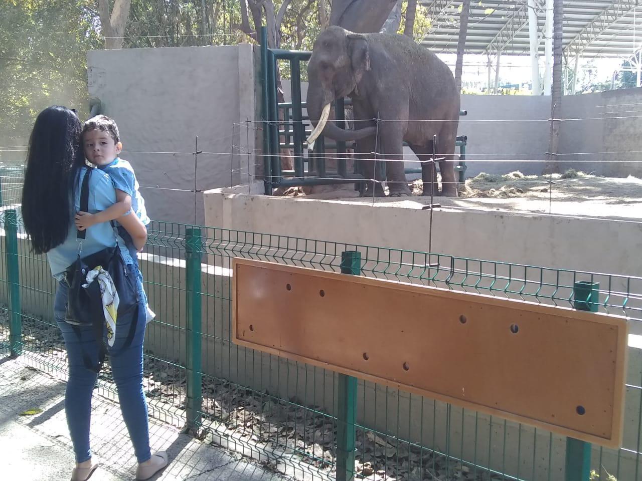 $!Desmiente activista supuesto maltrato al elefante 'Big Boy'